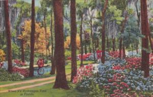 Florida Hydrangea Time