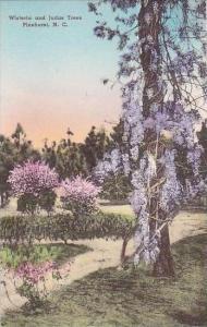 North Carolina Pinehurst Wisteria &  Judas Trees Albertype