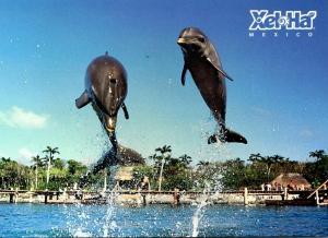 Mexico Xel Ha Bottle Nose Dolphin