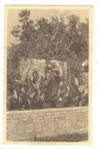 Lioness Statue,Cactuses,Brookgreen Gardens,SC,20-30s