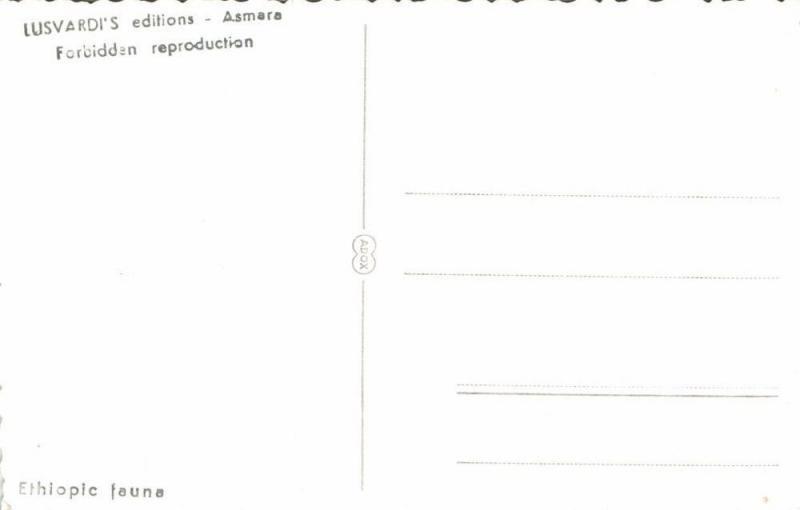 ethiopia, Ethiopic Fauna, Monitor Lizard (1950s) RPPC