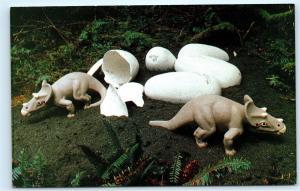 Dinosaur Eggs Prehistoric Gardens Oregon Coast Highway 101 Postcard B31