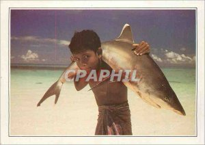 Postcard Modern Maldives Islands has white tip shark