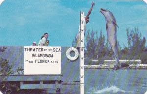 Florida Islamorada Jumping Porpoise At Theater Of The Sea In The Florida Keys
