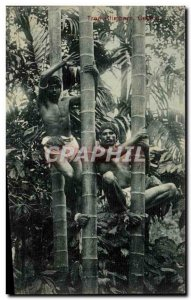 Postcard Old Tree Ctimbers Sri Lankan Ceylon Bamboo