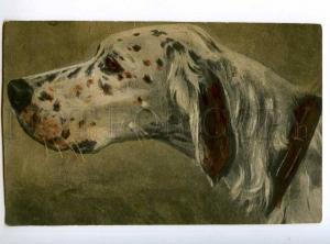 234669 Hunt ENGLISH SETTER Dog Vintage tinted Card