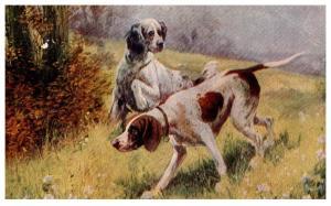 Dog , Springer Spaniel
