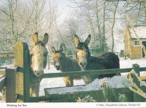 Hampshire Horses Donkeys Waiting For Tea in Farm At Christmas Postcard