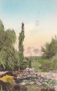 Lily & Fish Pond, National Home Daughters Of America, Tiffin, Ohio, 1900-1910s