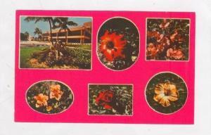 6-view postcard, Grand Bahama Hotel, Grand Bahama, Bahamas, 50-60s