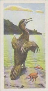 Brooke Bond Tea Vintage Trade Card Wildlife In Danger No 26 Galapagos Flightl...