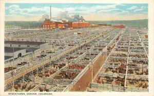 Stockyards, Denver, Colorado Livestock Sheep c1920s Vintage Postcard