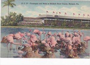 Florida Miami Hialeah Park Flamingos &  Nests