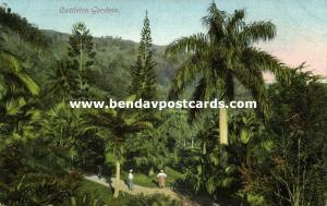 jamaica, CASTLETON Gardens, Palm Trees (1910s)