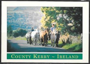 Ireland, County Kerry, ponies, unused
