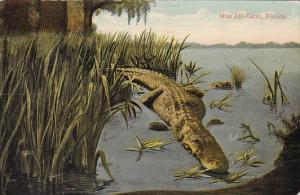 Miss Alli-Gator In Florida 1917
