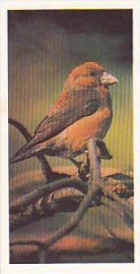 Brooke Bond Vintage Trade Card Woodland Wildlife 1980 No 28 Crossbill