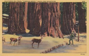 SANTA CRUZ Mountains, California, 1930-40s; California Big Trees, Compass Gr...
