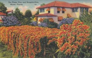 Florida Miami Beautiful HOme Surrounded By Flame Vine and Bougainvillea