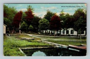 Corry PA, State Fish Hatchery, Vintage Pennsylvania c1916 Postcard