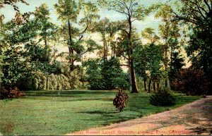 Massachusetts Cambridge James Russell Lowell Grounds Showing Elms