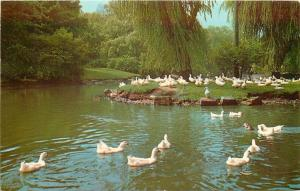 Canton Ohio~Duck Pond And Lagoon In Monument Park~1950s PC