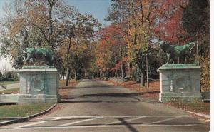 Rhode Island Bristol Colt Drive With Bronze Bulls