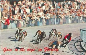 Florida Greyhound Racing Going to the Dogs in Florida  Postcard