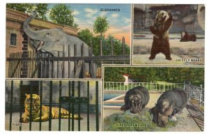 Scenes From The Memphis Zoo