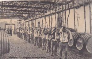 Portugal Madeira Workers Carrying Madeira Wine