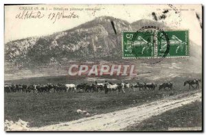 Old Postcard Quail Betail the communal pasture Cows