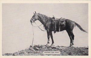 Western Cow Pony D C Mahoney Packanack Lake New Jersey Real Photo