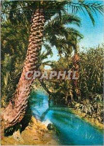 Postcard Modern Tunisia Gabes Palmeraie