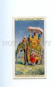 166940 State ELEPHANT India Vintage ADVERTISING CADBURY Card