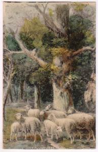Sheep Scene - Under the Old Oaks