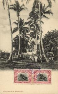 guatemala, C.A., View with Palm Trees (1906) Postcard
