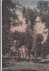 A Corner Of The Campus, University Of Missouri, Columbia, Missouri, 1900-1910s