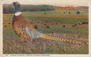 Oregon's Famous Game Bird The Chinese Peasant Curteich