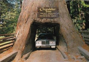 California Leggett Chandelier Drive Trhu Tree 1997