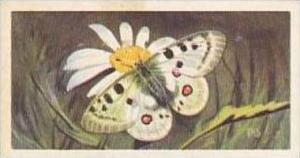 Brooke Bond Vintage Trade Card Wildlife In Danger 1963 No 50 Alpine Apollo Bu...