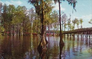 North Carolina Wilmington Greenfield Gardens