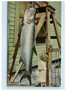 Early Florida Tarpon Postcard Little Girl Looking Up