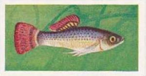 Mitchum Foods Vintage Trade Card Aquarium Fish 1957 2nd Series No 26 Liberty ...