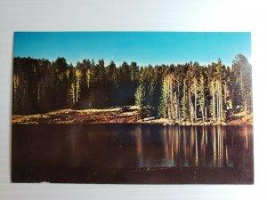 Vintage Postcard Hurricane Lake Fort Apache Indian Reservation Arizona unposted
