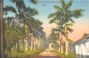 Nigeria Aburi (b) Avenue of Royal Palms, Trees