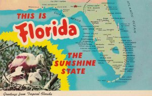 FLORIDA State Outline, Map, Pelicans, 1950-1960s