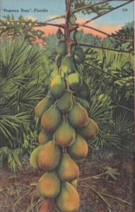 Florida Trees The Papaya Tree