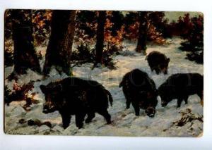 156608 Winter Hunt WILD BOAR by GRABBIUR Vintage Color PC