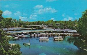 Florida Silver Springs Florida's Silver Springs Near Friendly Ocala 1960