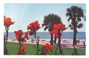 Cannas add a Beautiful touch to the lawn of the Pavilion at Myrtle Beach, Sou...